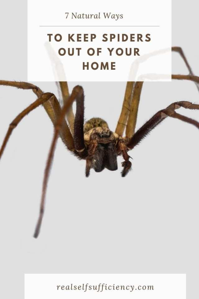 how to keep spiders out of your home