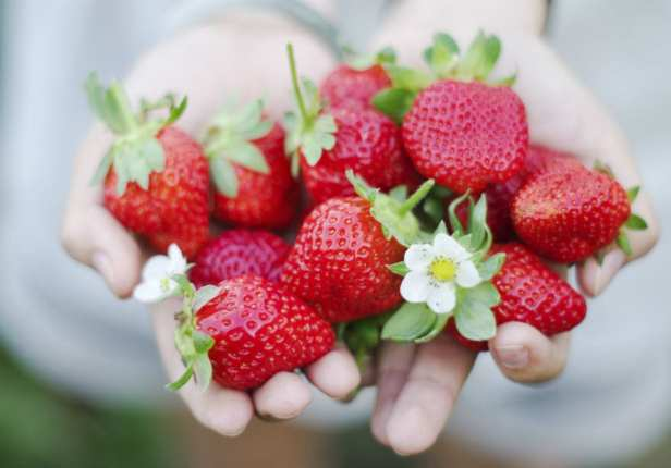 how to regrow strawberries