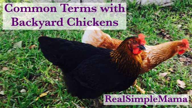 Common Terms with Backyard Chickens - Real Simple Mama