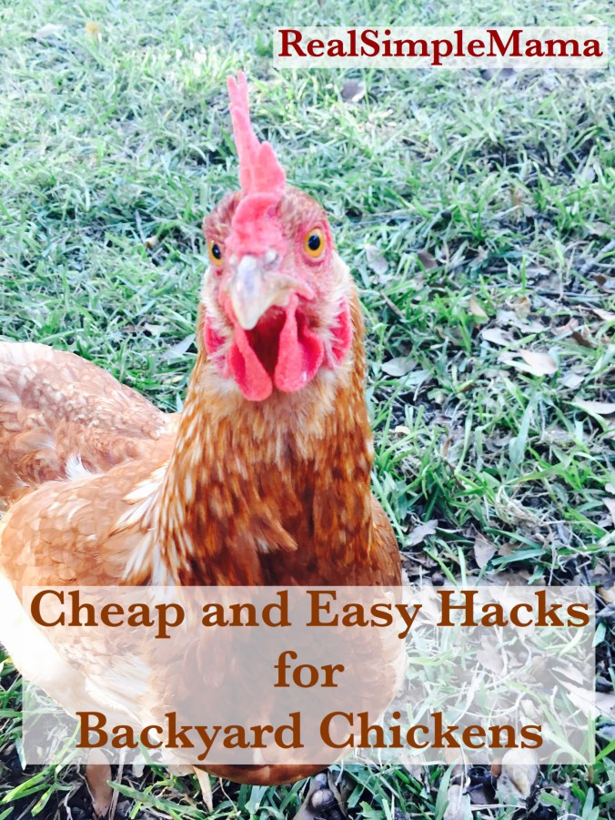 Cheap and Easy Hacks for Backyard Chickens - Real Simple Mama