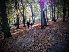 autumn-1204603__180