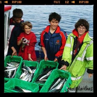 boxes-of-mackerel