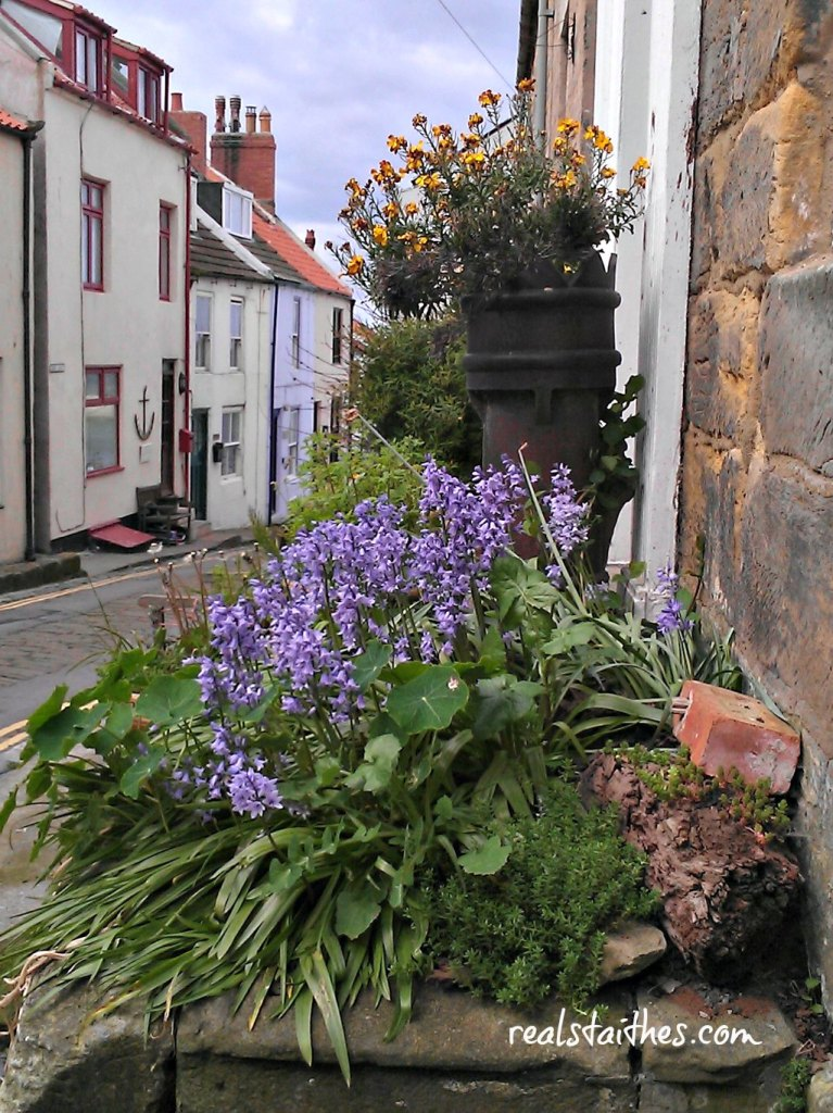 bluebells-staithes-2014