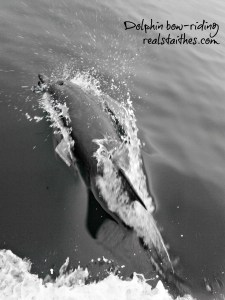 bow-riding-dolphin