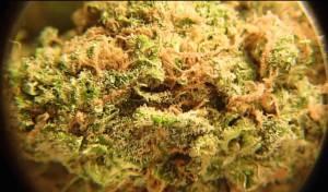Green Katamala | Rare Cannabis
