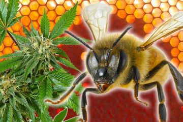 cannabis-infused-honey