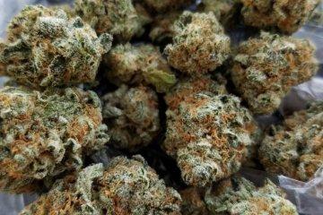 Sour Diesel Weed