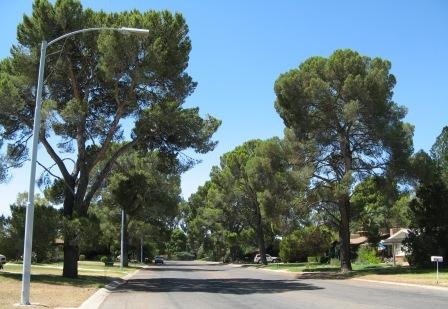 Winterhaven is known for the large pine trees that were planted in 1949 by Winterhaven's founder, CB Richards.