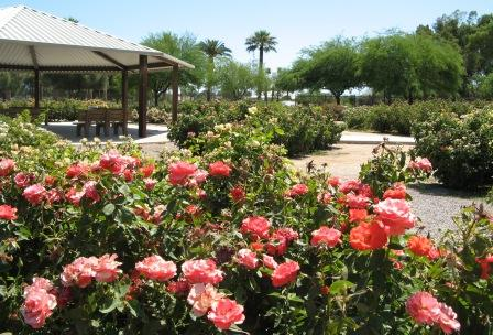 The Rose Garden in Reid Park featuring over 100 species of roses.