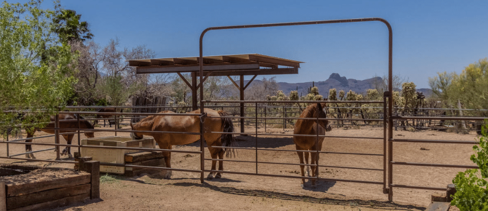 Horse corral - Horse Property in Tucson
