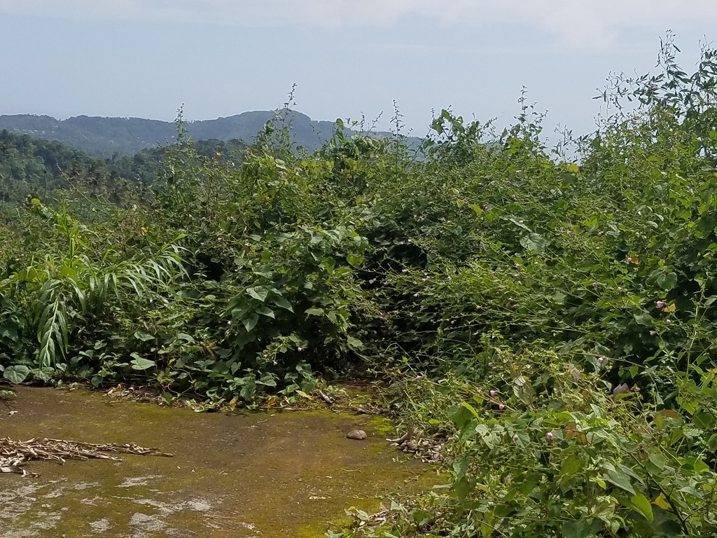 uy agricltural land for sale in st lucia with fruit trees