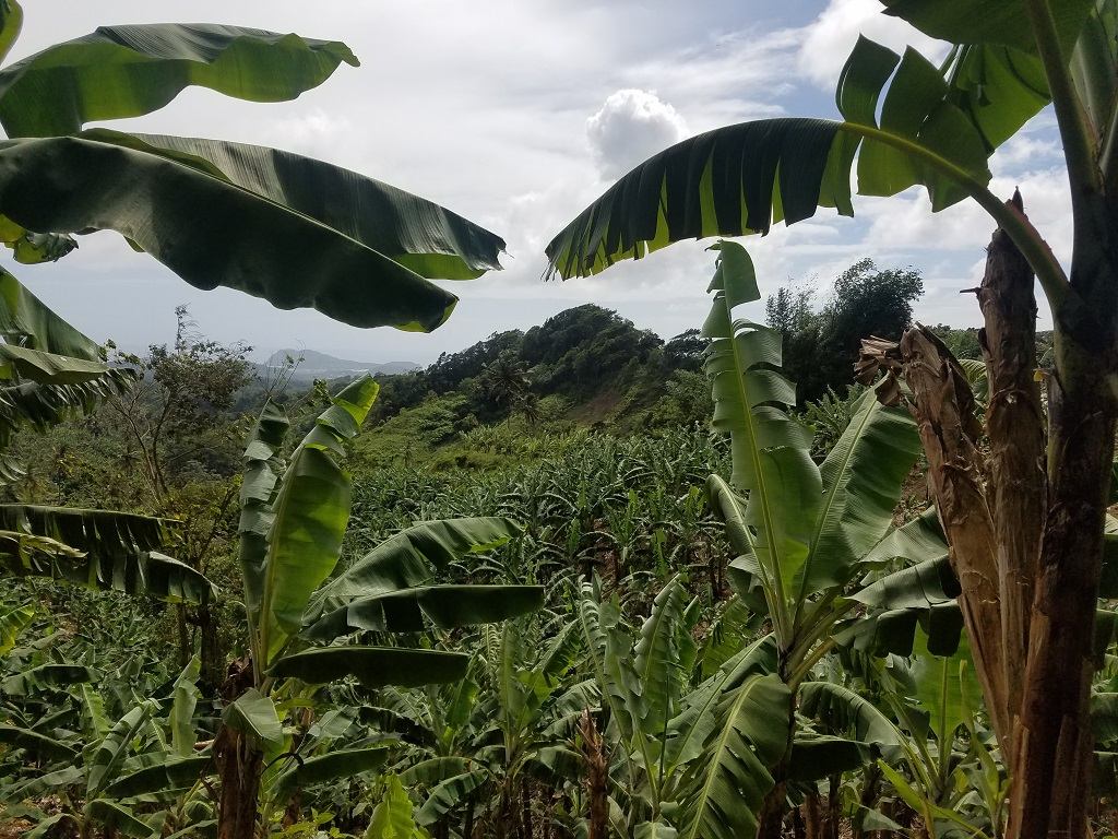 buying farm land in st lucia