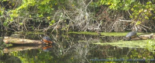 Mirror Turtles