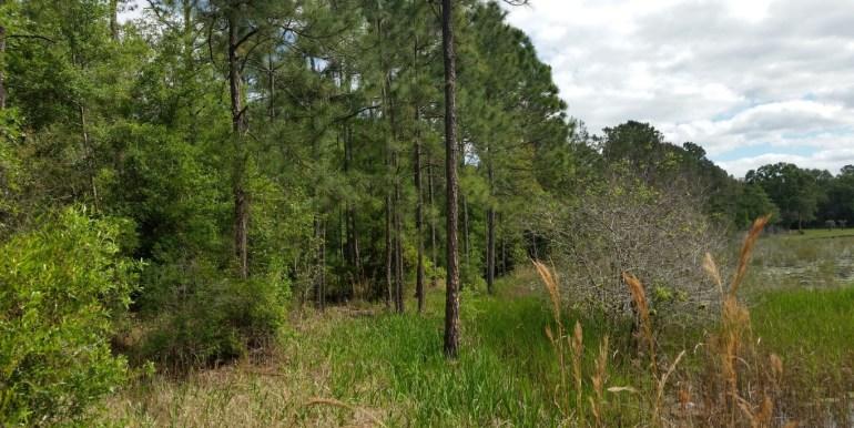 Putnam lt lake shore trees (Medium)