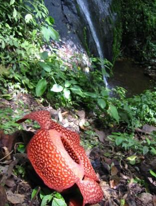 Rafflesia Sanctuary