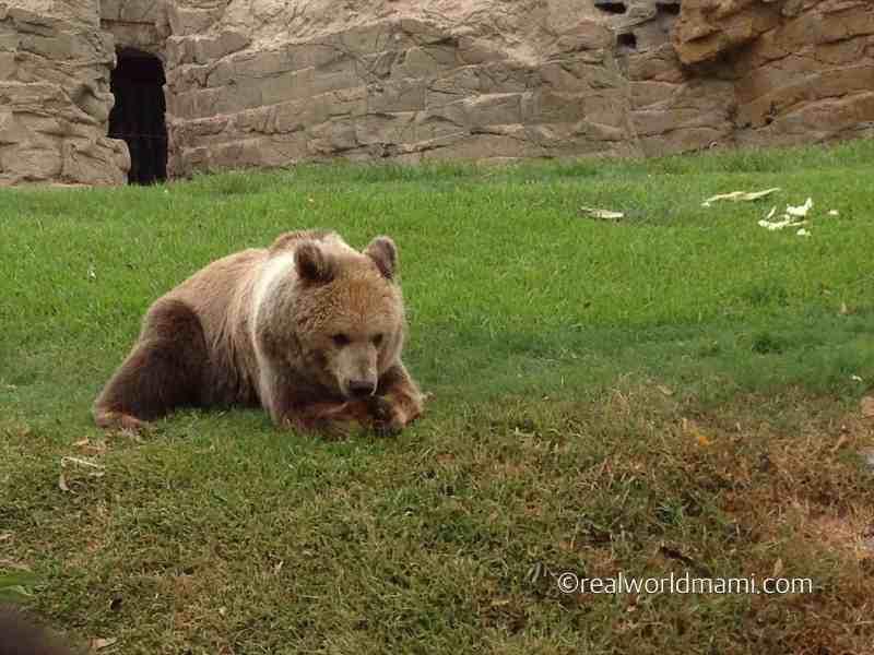 Paddington Bear Lima Peru