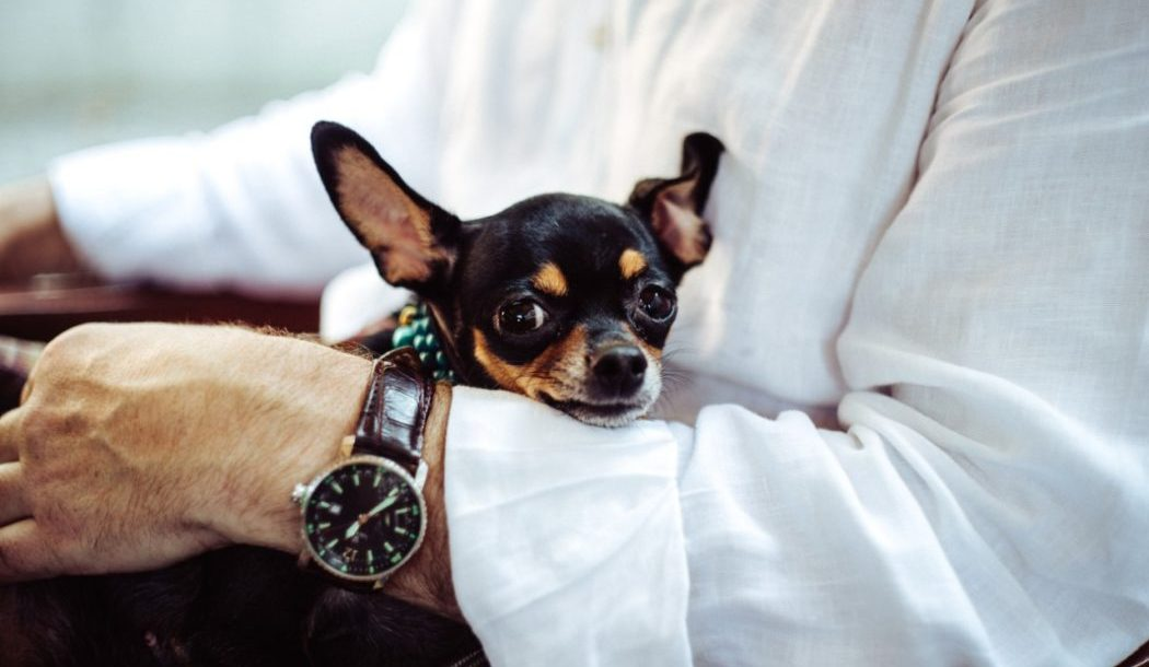 Tips to move in with your pet