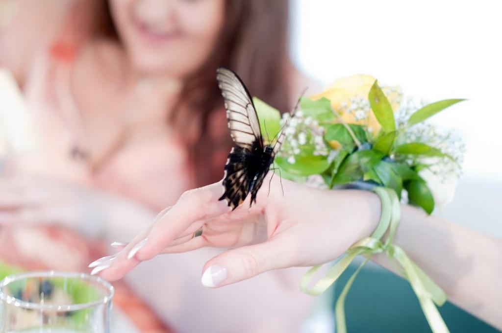 strategia fluture pe schema de opțiuni)