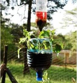 Photo of hanging vegetable garden