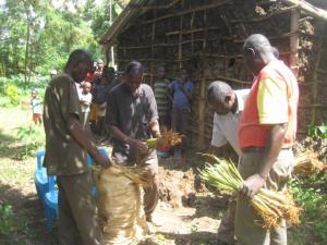Ben distributing vetiver grass