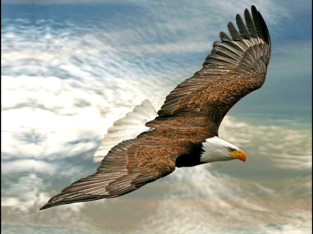 bald-eagle-flying-in-sky