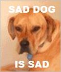 sad dog chiro