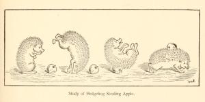 bookofcheerfulcats - hedgehog