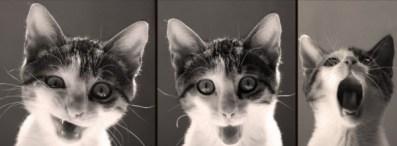 الترديد والتكلم كالببغاوات، ربما كالقطط