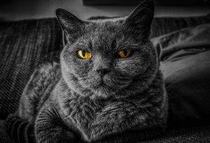 قطة ماكرة