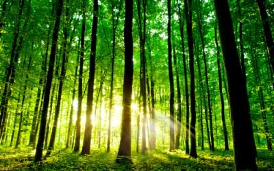 Forest bathing, wat is het & waar is het goed voor? #zelfzorgtip