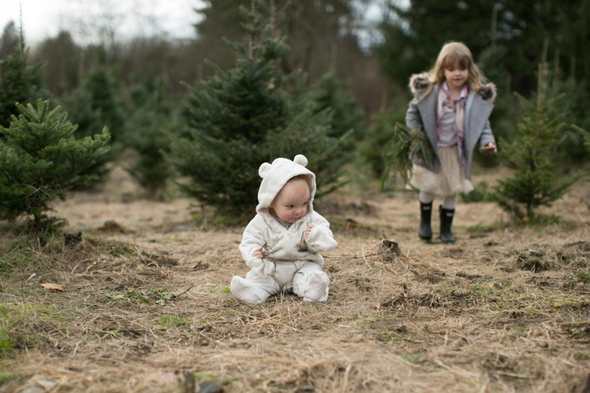 christmas tree farm-rebbi anderson-44