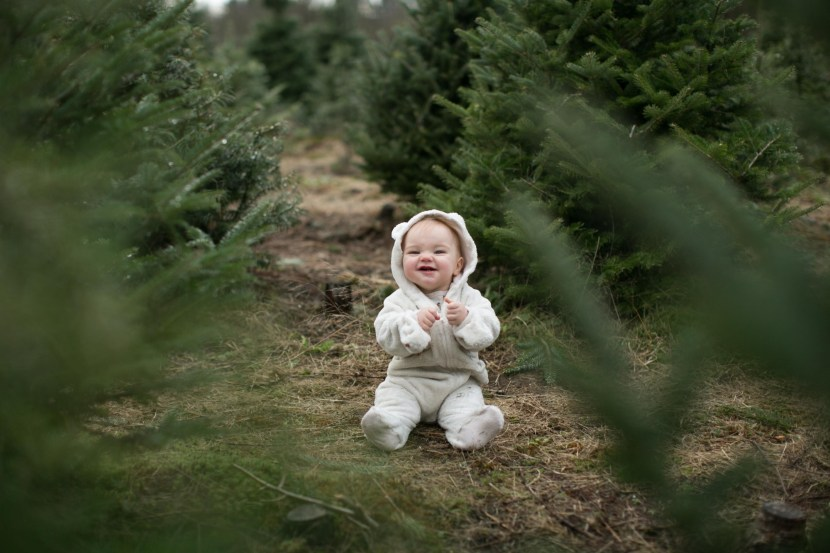 christmas tree farm-rebbi anderson-53