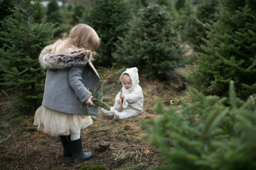 christmas tree farm-rebbi anderson-70
