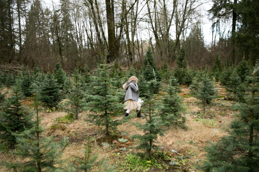 christmas tree farm-rebbi anderson-8