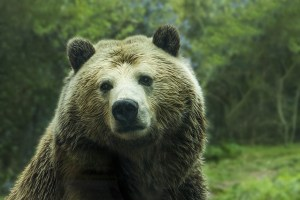 bear, whyr, nanowrimo