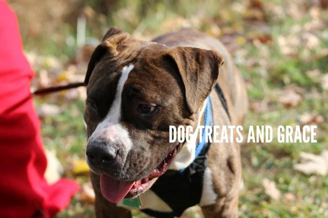 DOG TREATS AND GRACE