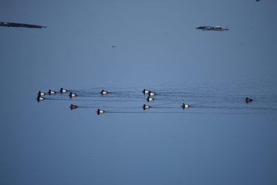 Birding - Lake Pepin MN WI