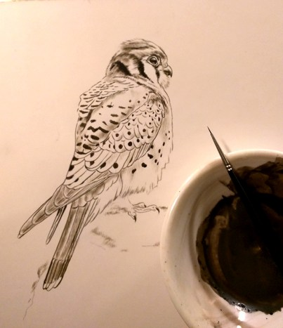 New American Kestrel Painting, Sepia Stage, Rebecca Latham