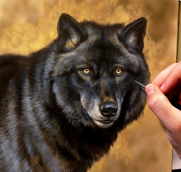 New Black Wolf Painting, 8.5x8.5, work in progress, Rebecca Latham