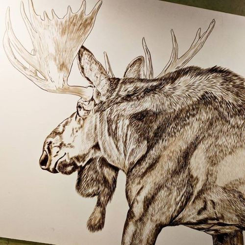 Bull Moose (Presently Untitled) in progress, 20x24in, watercolor on board