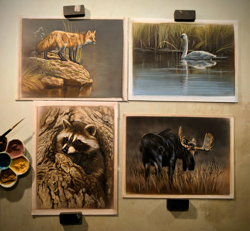 Peek In The Studio – Raccoon, Moose, Trumpeter Swan, & Fox