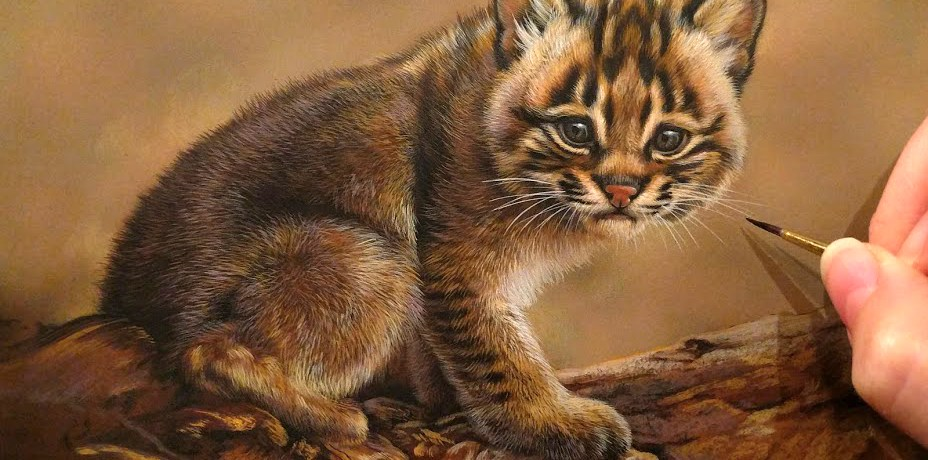 Bobcat Kitten in progress, watercolor on board, 6in x 8in, Rebecca Latham