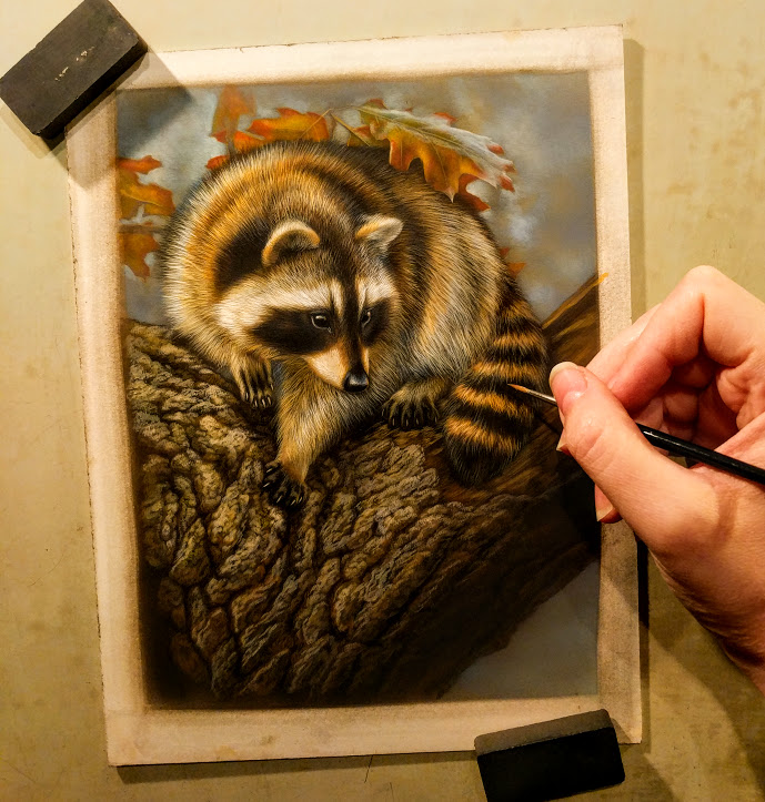 Peek In The Studio – Treed Raccoon