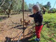 Glückliche Hühner / Free-range chicken