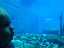 Schlupp mit Delfin / Schlupp with dolphin