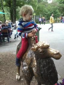 Kamelreiten / Camelriding