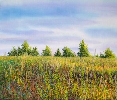 """Arbor Hills Nature Preserve 10"""" x 11.5"""""""