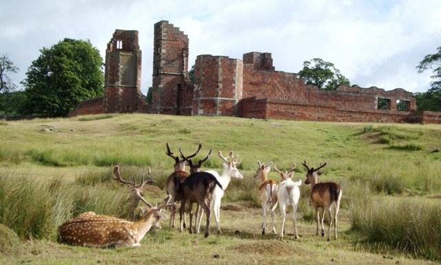 Deer-herd-and-Bradgate-Ruins.jpg