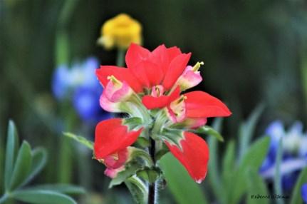 Vibrant Spring Color
