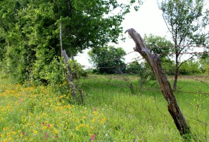 flowers-fence-posts-2